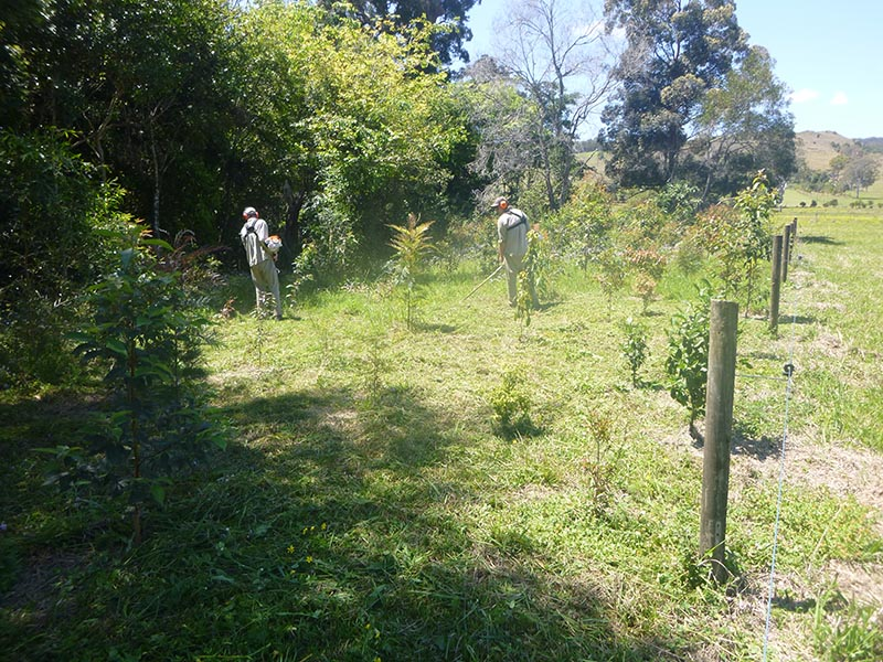 revegetation project, Belli Park