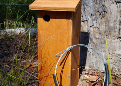 Feather Tail Glider Box
