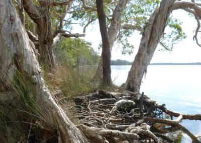Lake Cooroibah