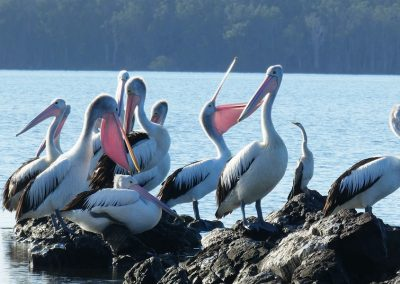 Lake Weyba Bushland Reserve Network