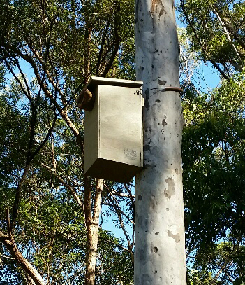 nesting box - black mountian
