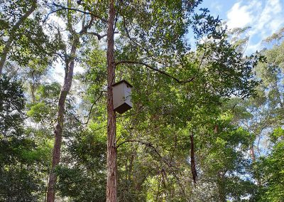 squirrel glider habitat box - doonan