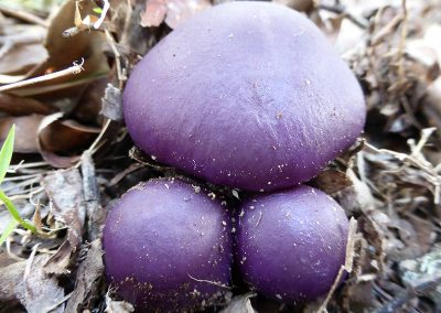 unusual qld fungi